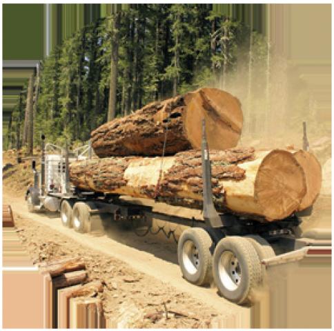 Работа на деревообрабатывающем предприятии в Польше