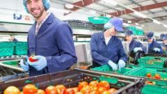 Требуются на завод на упаковку овощей. Германия